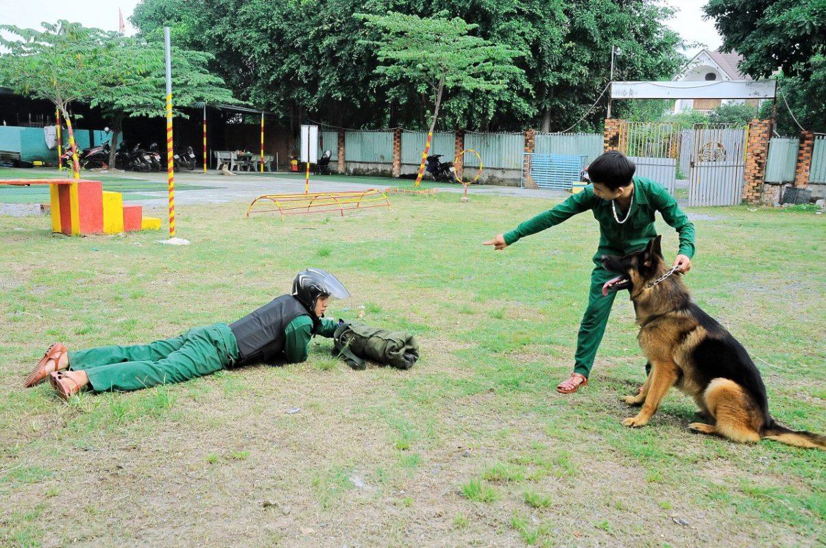Trung tâm huấn luyện chó chuyên nghiệp nhanh chóng